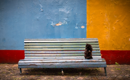 the cat is watching the tourists in La Boca