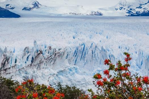 Perito Moreno Glacier in summer