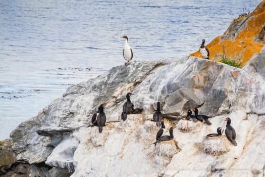 sea birds from the Beagle Channel